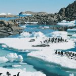 Adelie Penguins and Leopard Seals resting on ice floes, Rauer Isla, East Antartica