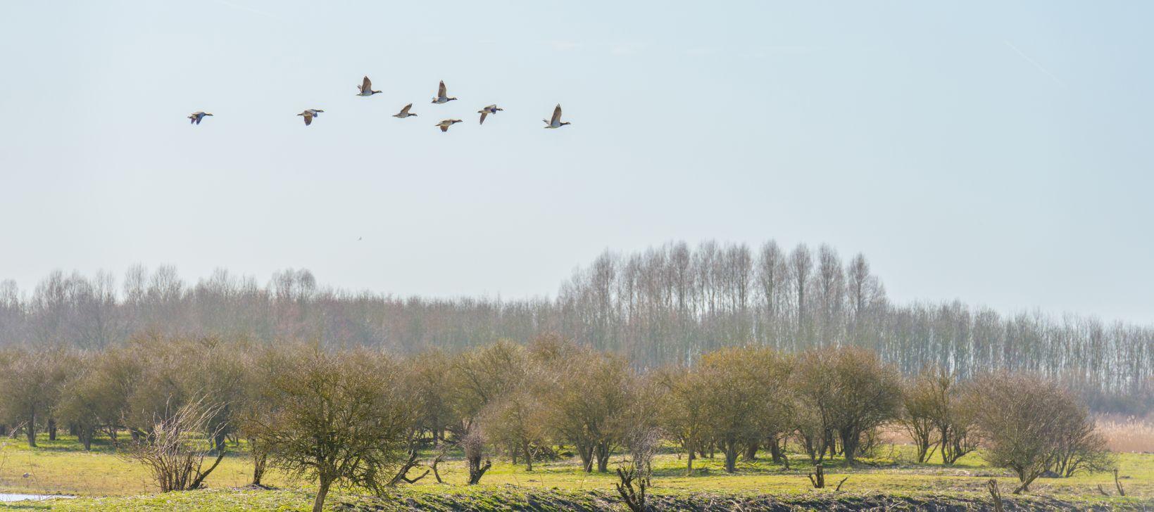 Birds flying over nature in sunlight